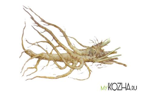 корень-алтея