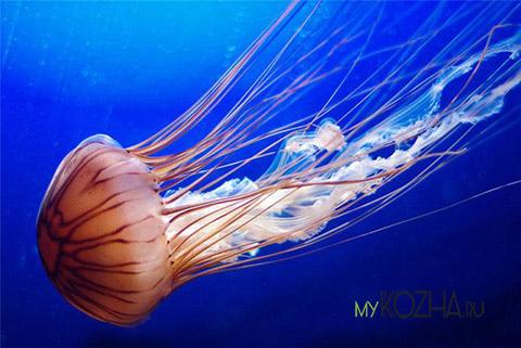 ожог от медузы